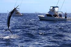 Celebran torneo anual de pesca en Guaymas Sonora