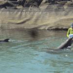 nace delfin