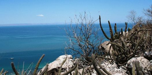 Demandarán a quienes removieron la vegetación del Cerro de la Calavera