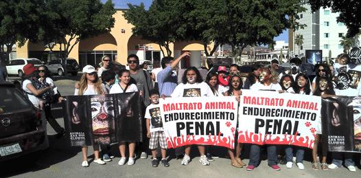 Marchan contra maltrato de animales en circos