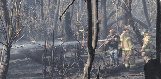Presumen fue provocado el incendio en Todos Santos
