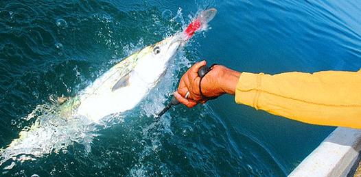 Invertirán 8 mdp para promover la pesca deportiva