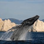 ballenas en CSL