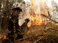 Tiene CONAFOR poco presupuesto para combatir incendios forestales