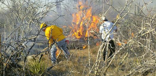 Han arrasado incendios forestales 180 mil hectáreas en BCS