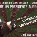 Burro Chon