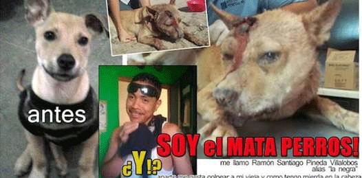 Exigen castigo para el torturador de perros