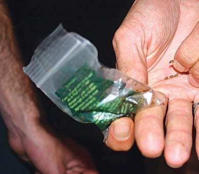 Con marihuana y cristal agarraron a Tomás