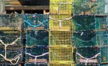 Financiarán tecnología sudcaliforniana de pesca
