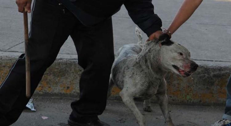 Que hagan valer la Ley de Protección de Animales
