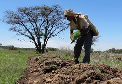 Acudirá personal de CONAFOR a comunidades rurales
