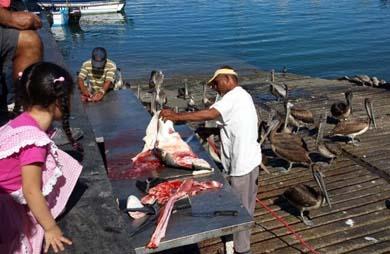 Inician las obras de área de fileteo para pescadores