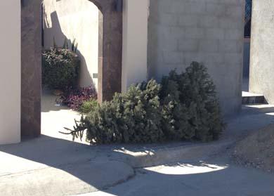 No tire sus pinos a la calle