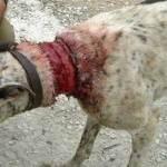 maltrato a los animales