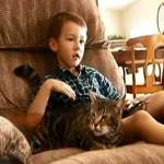 gato tantafilo
