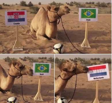 Del pulpo Paul al camello Shaheen