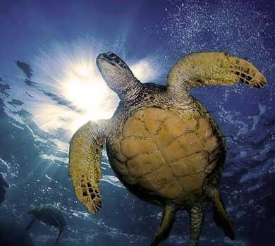 Presentan propuesta de manejo ecoturístico de la tortuga marina