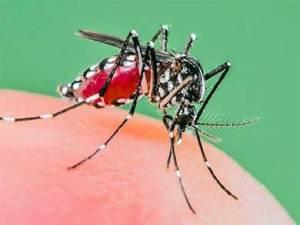 caso autóctono del chikungunya