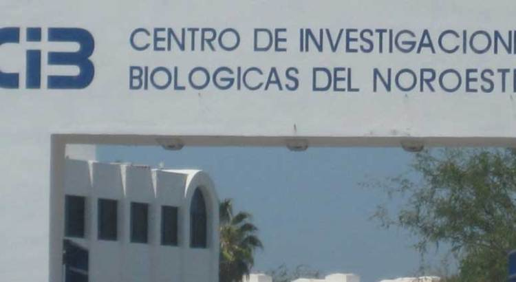Se lava CIBNOR las manos en el caso Sierra La Giganta y Guadalupe