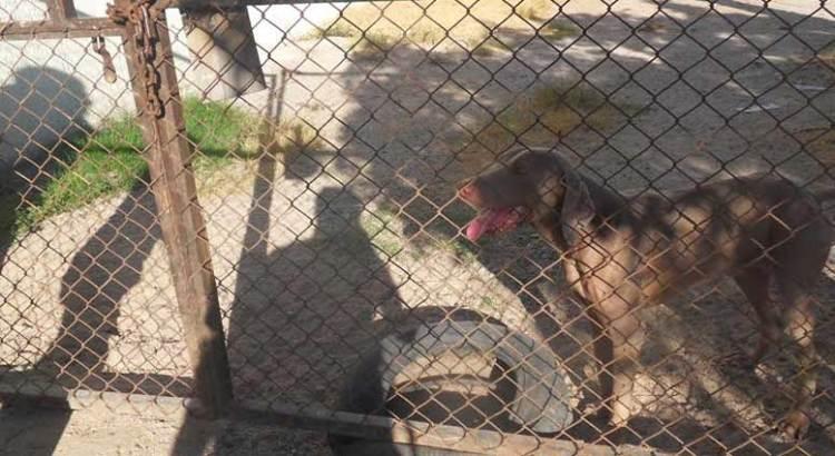 Desmienten maltrato animal en veterinaria