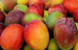 Festival del Mango en Todos Santos