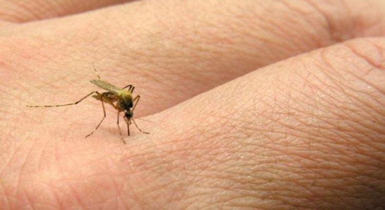 Registrados cinco casos de Chikungunya en Los Cabos