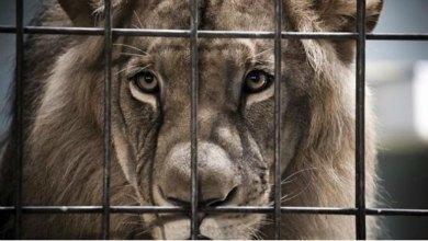 Condenan a 3 leones a cadena perpetua