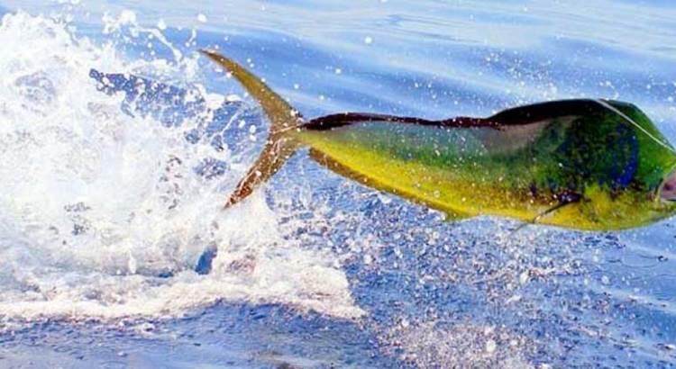 En puerta torneo de pesca CANACO