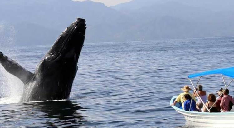 Si habrá avistamiento de ballenas