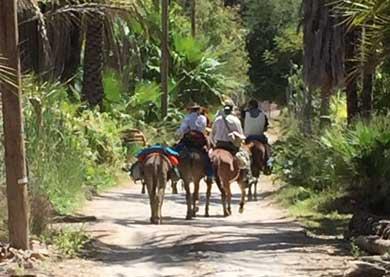Organizan viaje a lomo de bestia