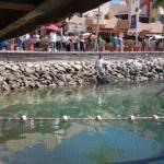 rescate del lobo marino en la bahía de Cabo San Lucas