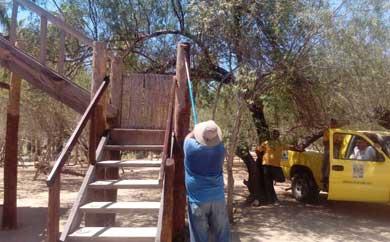 Rehabilitan torres de avistamiento de aves en estero josefino