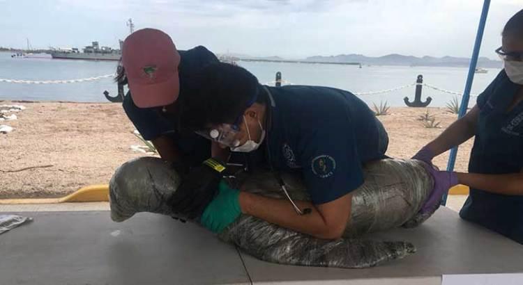 Apoya UABCS durante simulacro de derrame de hidrocarburos