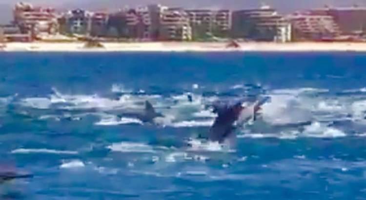 El espectáculo de navegar entre delfines
