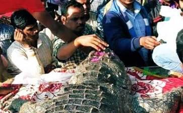 Todo el pueblo acudió al entierro… de un cocodrilo