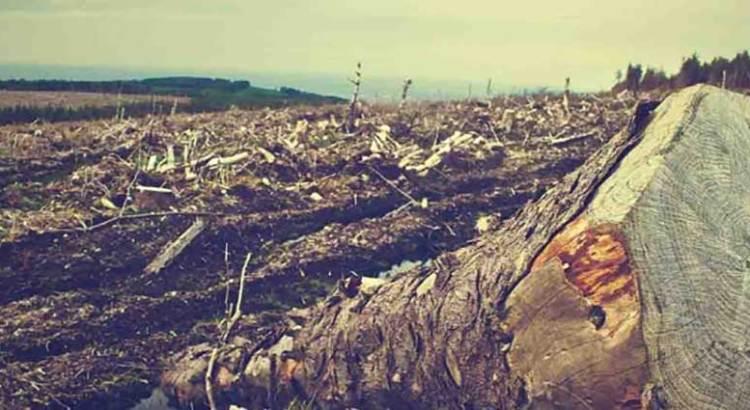 Reportan aumento significativo de deforestación en Brasil