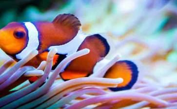 Perdiendo a Nemo