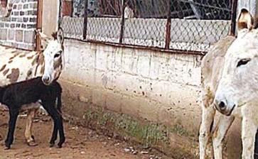 Hacia un México sin burros
