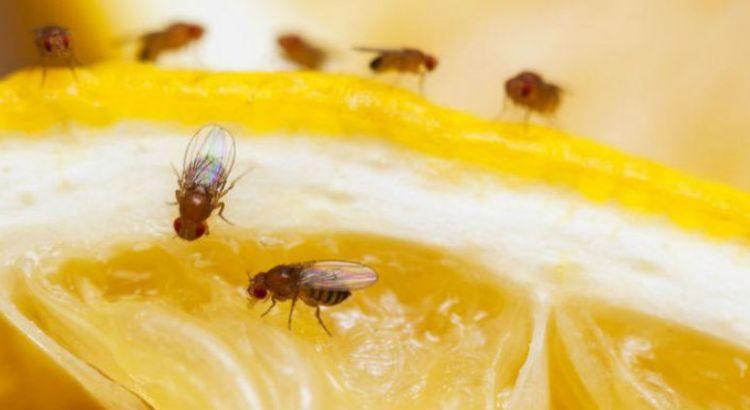 """Contaba con certificados oficiales la carga afectada con """"mosca de la fruta"""""""