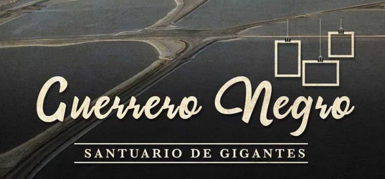 "Abierta la convocatoria a ""Guerrero Negro santuario de gigantes"""