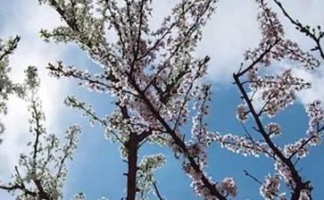 Crean árbol de tutti frutti