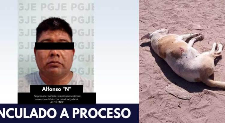 En prisión preventiva por matar un perro de un balazo