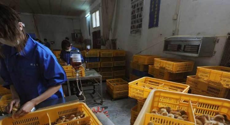 Confirma China primer contagio humano de gripe aviar