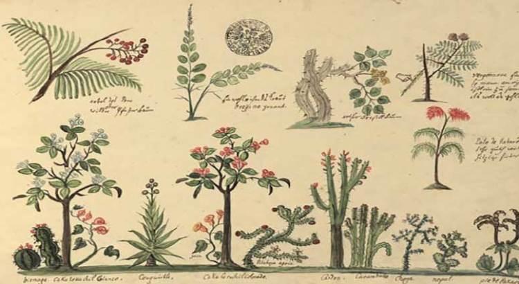 Desde Praga llega a Los Cabos el «Codex Pictoricus Mexicanus»
