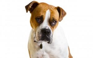 1-12-dog-ftr