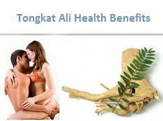 tongkat ali sex benefits