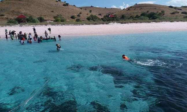 Snorkeling di sekitar Pantai Pink