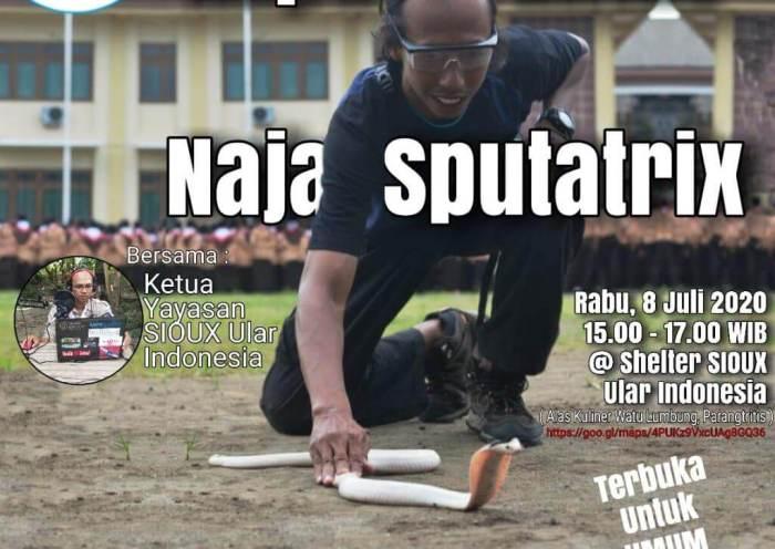Event Kupas Tuntas Naja Sputatrix - Yayasan Sioux Ular Indonesia