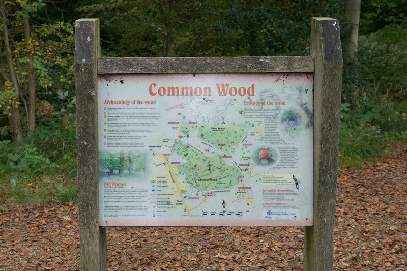 common-wood-1
