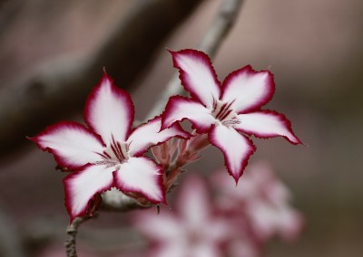 EARL Martinet & Fils – Horticulture